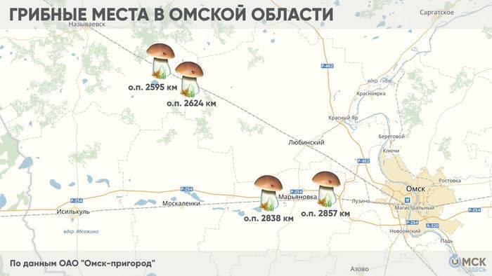 Грибная карта подмосковья, где и какие грибы можно собирать в августе - сентябре 2020 года | tele4n.net
