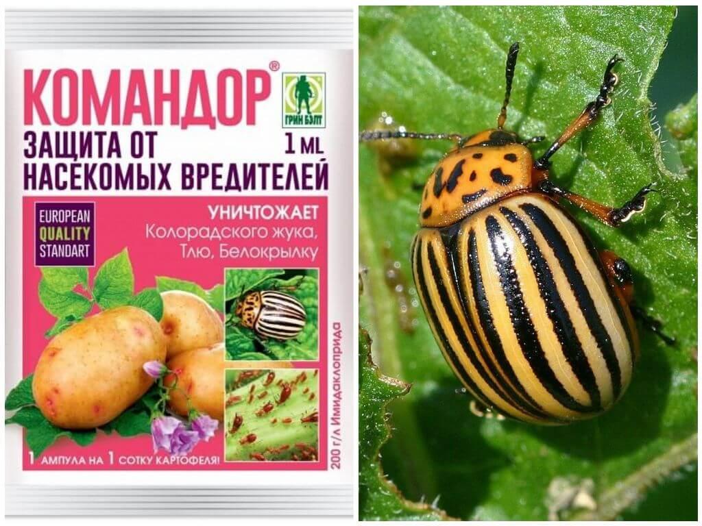 Методы борьбы с колорадским жуком. как избавиться? средства — ботаничка.ru