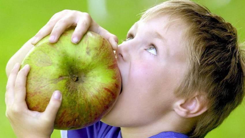 Самые большие яблоки в мире: топ-10 наиболее крупных сортов