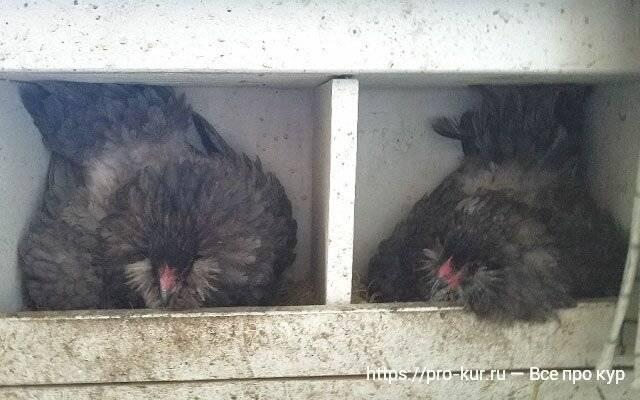 Самостоятельное изготовление гнезд для кур-наседок и несушек