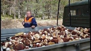 Выращивание грибов домашних условиях для новичков: с чего начать?