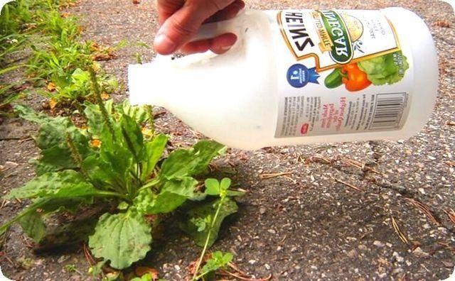 Обработка моркови керосином поможет избавиться от сорняков — садово-огородный рай