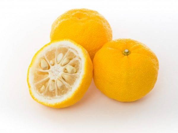 Юдзу: дерево, цитрус, фрукт