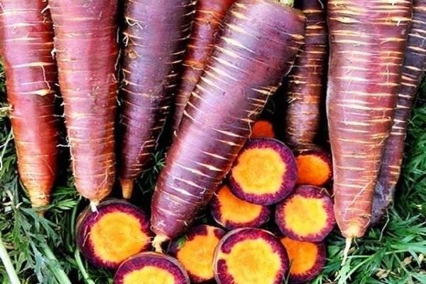Полезна ли фиолетовая морковь? состав, польза и применение | пища это лекарство