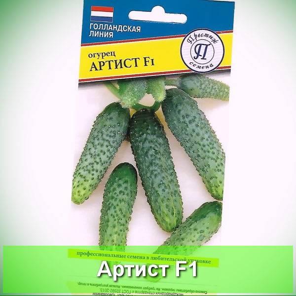 Огурцы балалайка f1 – выносливые толстячки от селекционеров агрофирмы «манул»