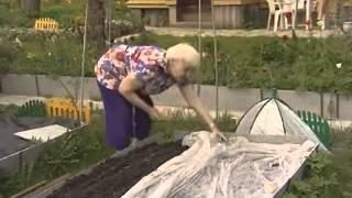 Посадка моркови без прореживания - огород, сад, балкон - медиаплатформа миртесен