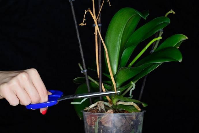 Почему не цветет орхидея — что делать, чтобы зацвела в домашних условиях ?