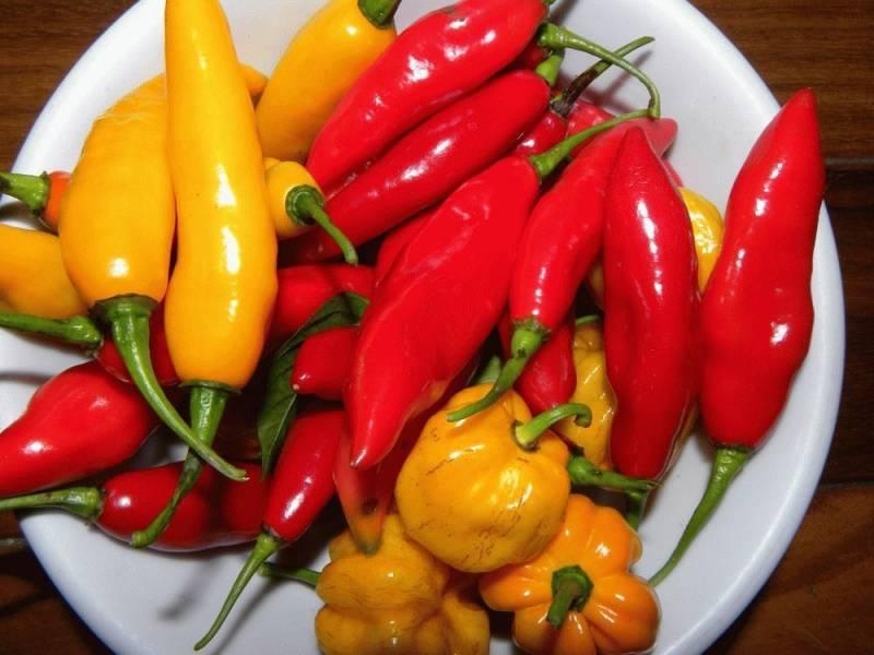 Лучшие сорта перцев для ленинградской области | вырасти сад!