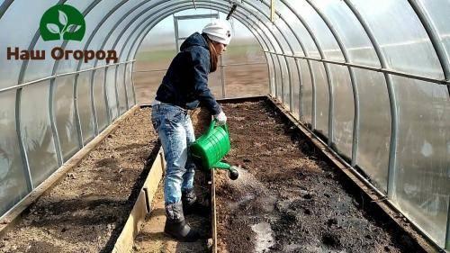Самостоятельная дезинфекция почвы в теплице