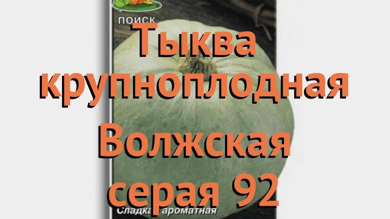 Тыква волжская серая: описание сорта, фото, отзывы, выращивание