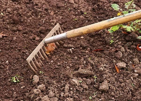 Каким способом сделать почву кислой для растений