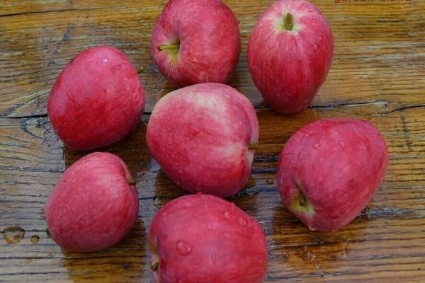 Сорт солнцедар — особенности и характеристика яблони