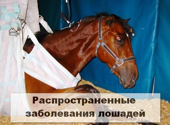 Случная болезнь лошадей: диагностика болезни, причины возникновения, пути заражения, симптомы, лечение, фото