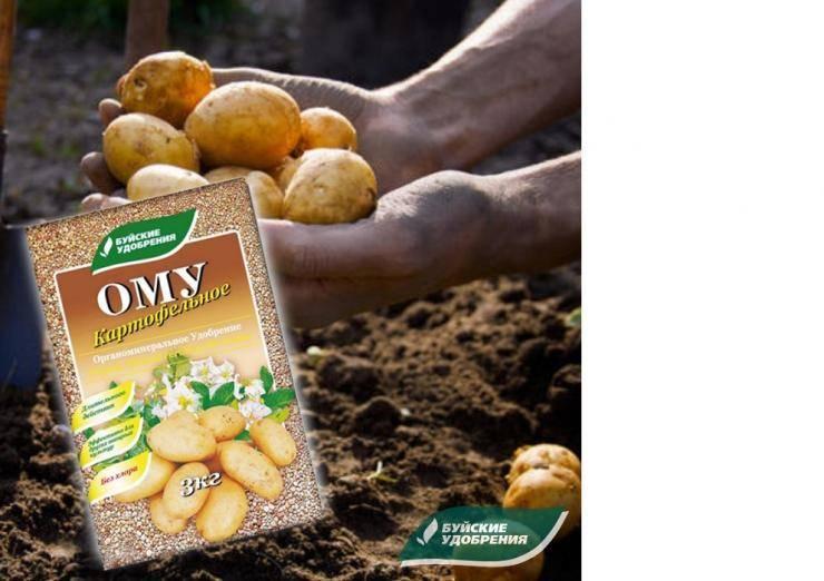 Удобрение для картофеля при посадке | красивый дом и сад
