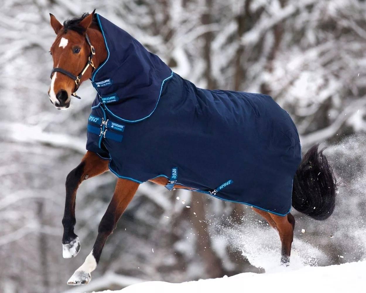 Попоны для лошадей: виды и типы, фото | мои лошадки