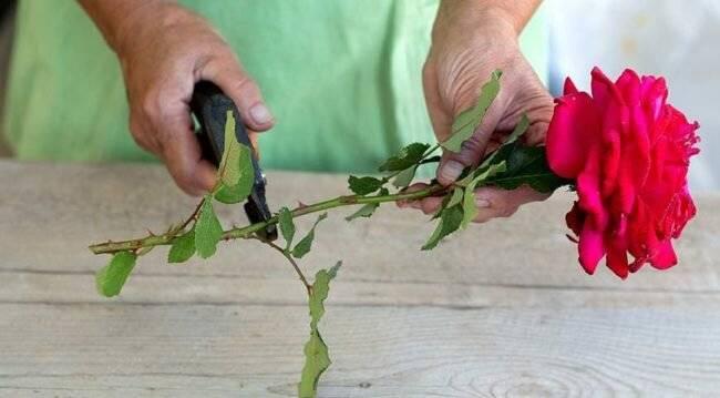 Как дольше сохранить букет цветов в вазе с водой - 9 советов