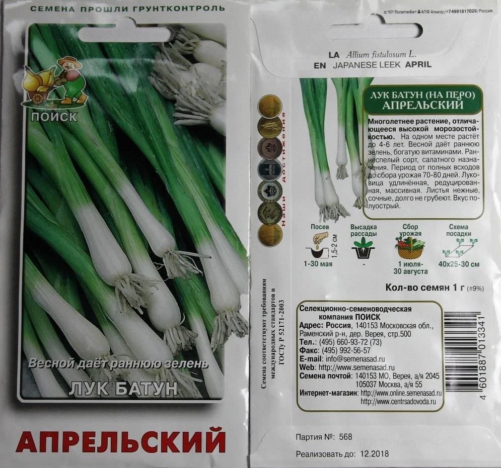 Выращиваем лук-батун . посадка семенами и рассадой. уход, фото — ботаничка.ru