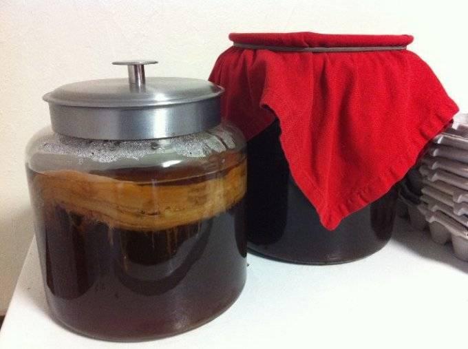 Чайный гриб: польза и вред, а также основные противопоказания