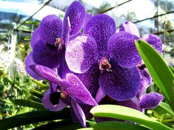 Правила подкормки орхидей в домашних условиях до и во время цветения