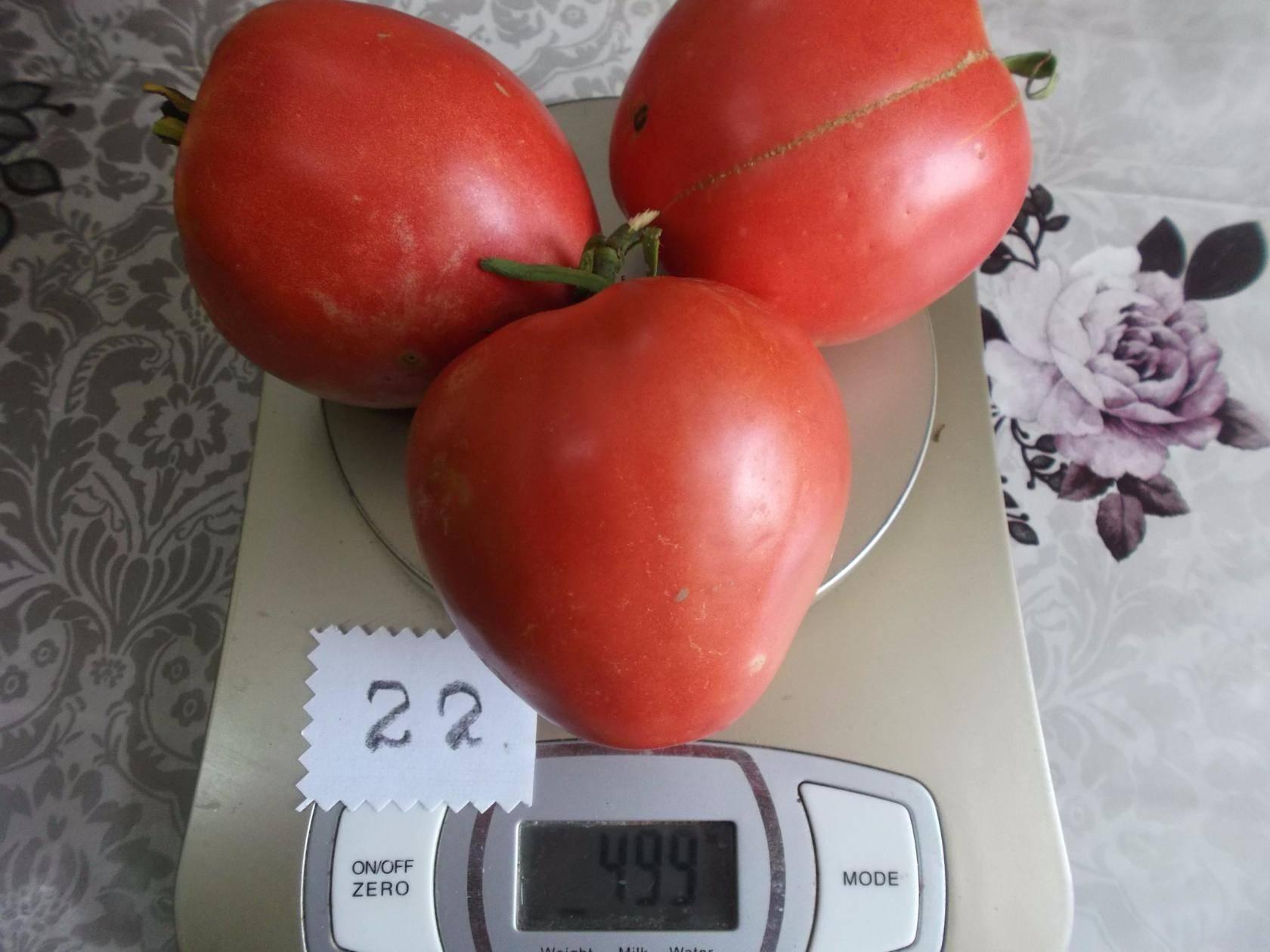 Описание сорта томата Анастасия — особенности выращивания