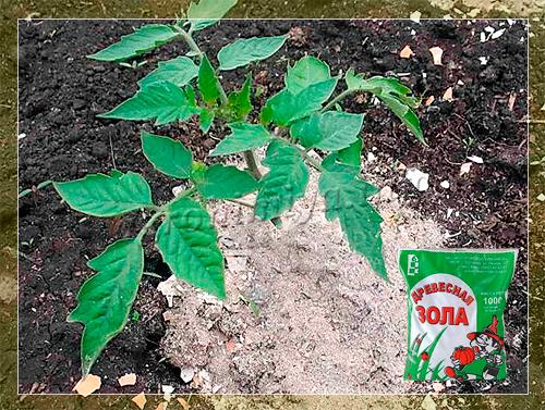 Древесная зола как удобрение: как применять для томатов, огурцов