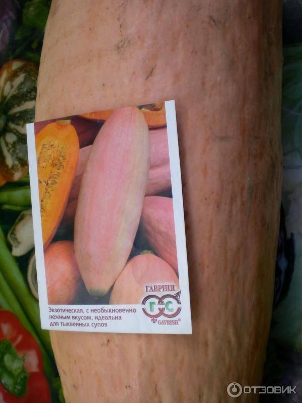 Тыква розовый банан: характеристика и описание декоративного сорта с фото