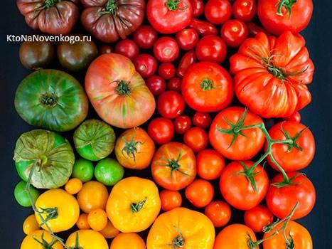 Помидор - это овощ или ягода
