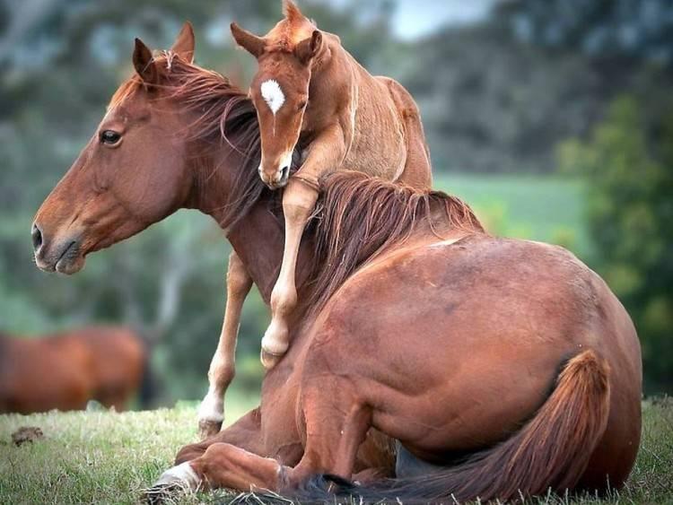 Болезни лошадей (инфекционные, незаразные): симптомы и лечение