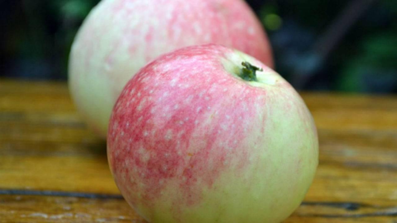 """Яблоня бельфлер - описание сорта, фото, отзывы - журнал """"совхозик"""""""