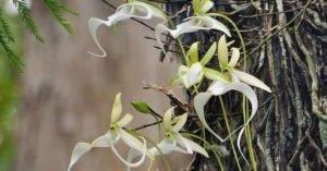 Великолепные орхидеи необычных форм и цветов, а также другие интересные цветы