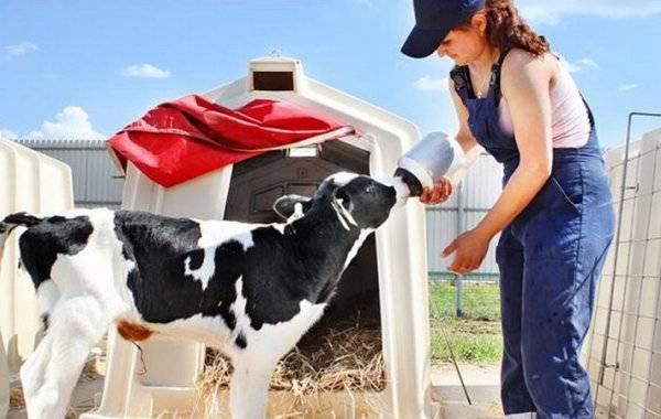 Вес коров в разном возрасте