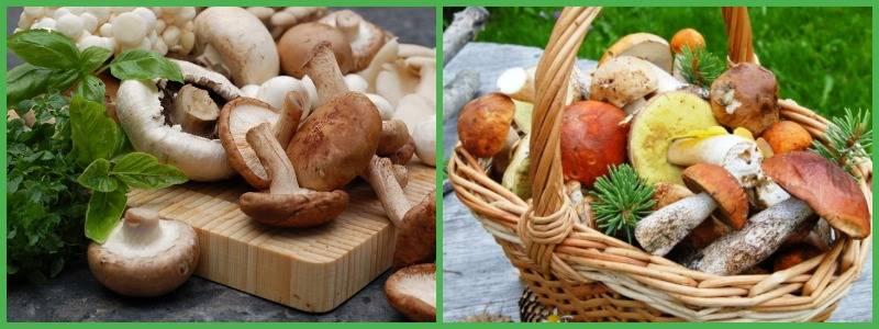 Польза грибов для фигуры