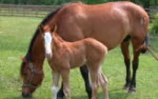 Спаривание лошадей: виды случки лошадей, спаривание лошадей и ослов