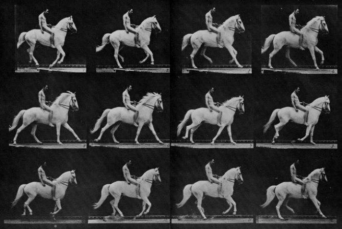 Бег лошади (аллюр): описание, способы и походка - сельская жизнь