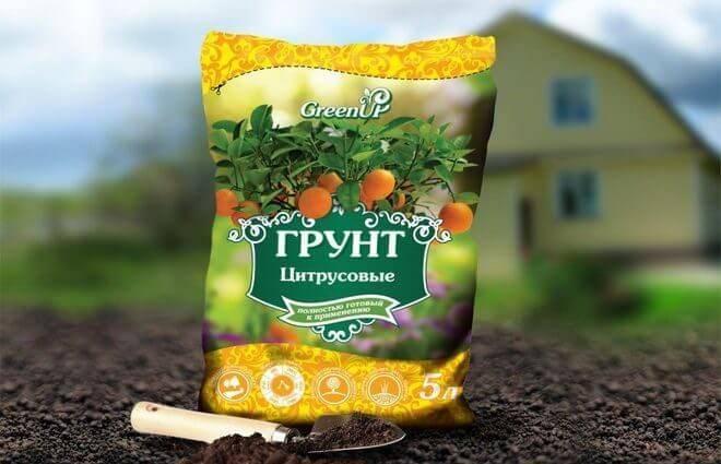 Уход за домашним лимоном зимой: как часто увлажнять, поливать и другие нюансы selo.guru — интернет портал о сельском хозяйстве