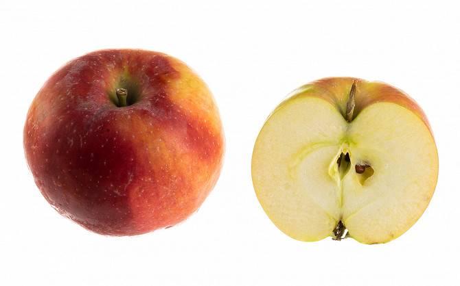 Самое большое в мире яблоко. гигантские сорта яблок самое тяжелое яблоко в мире