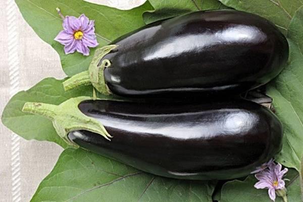 Описание сорта баклажана марципан — отзывы овощеводов