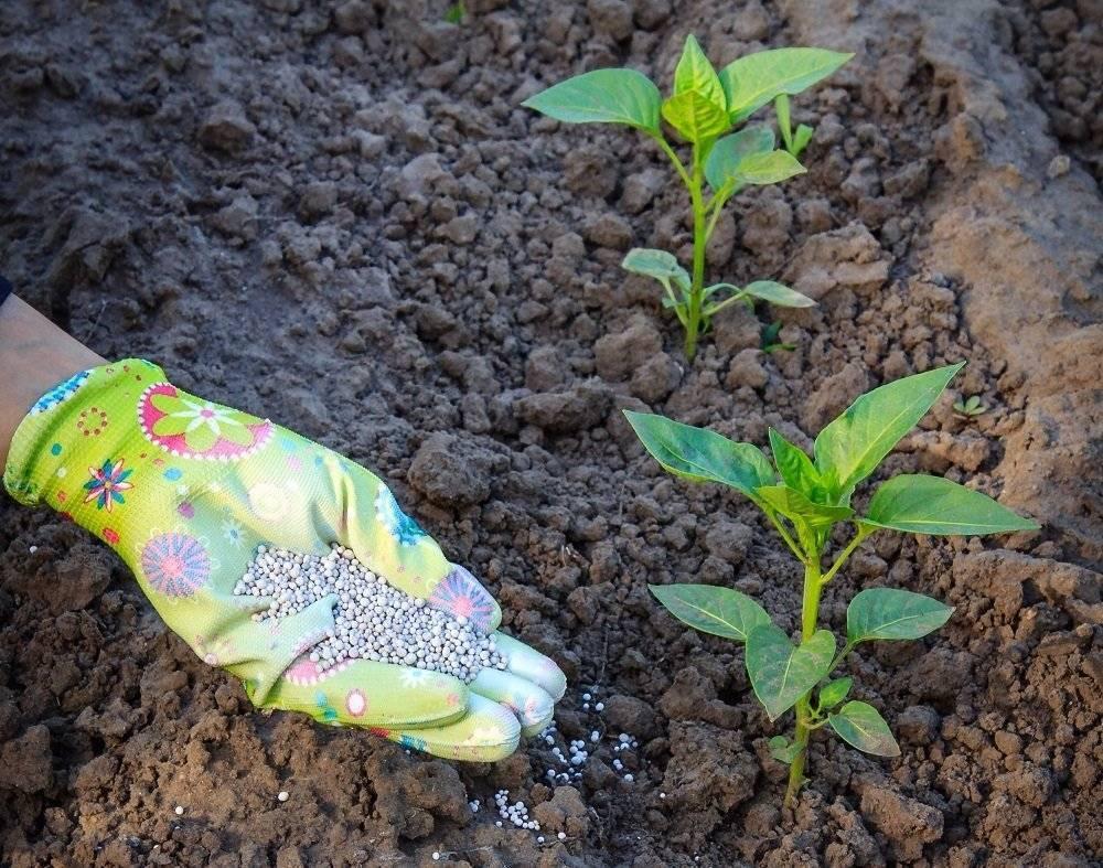 Чем подкормить перцы после высадки в грунт для хорошего урожая