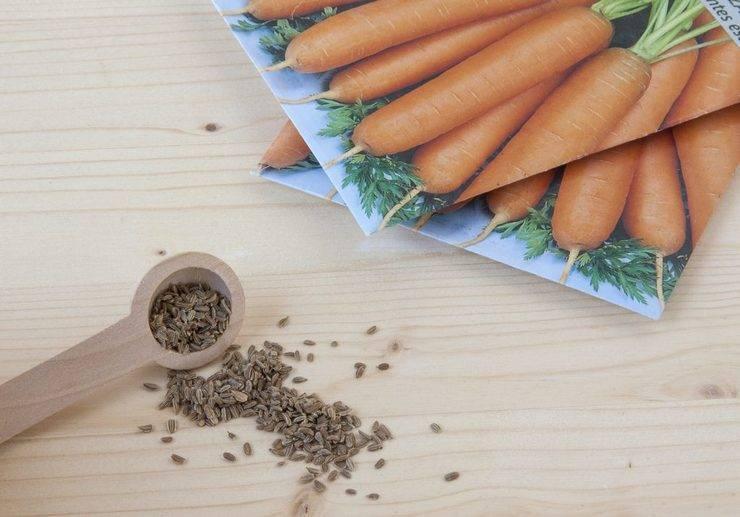 Через сколько дней всходит морковь: когда после посева в открытый грунт ждать, долго или быстро после посадки может взойти, в какое время прорастают семена, фото русский фермер