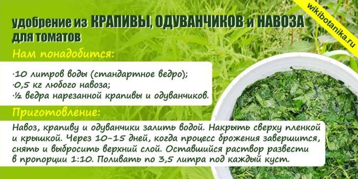 Удобрение из крапивы: как сделать настой для подкормки растений