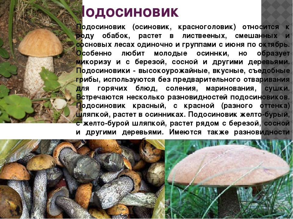 """Где растут грузди: о лесах, местах и грибных """"привычках"""""""