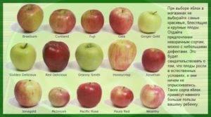 Лучшие сорта яблок для подмосковья: фото, названия и описания (каталог)