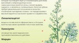Полынь горькая — википедия