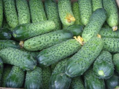 Огурцы герман: описание гибрида, отзывы о характеристиках, фото плодов, преимущества и недостатки