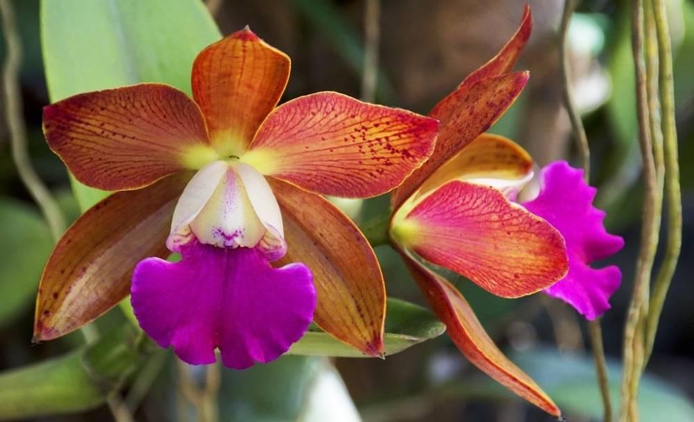Интересные орхидеи с мелкими цветами: сорта и описания