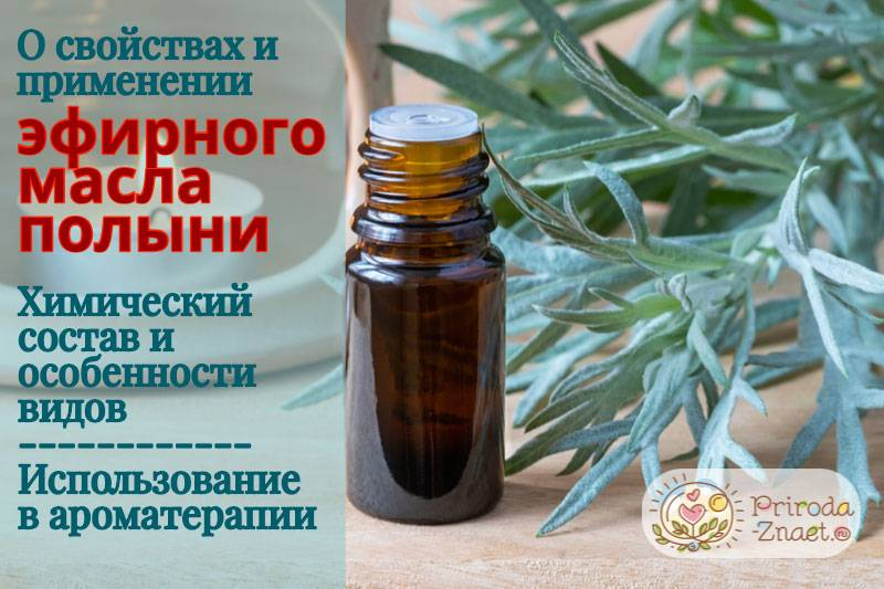 Описание эфирного масла полыни: польза и вред, состав, рецепты применения