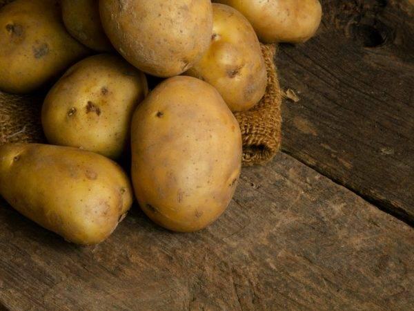 Картофель колобок: характеристика и описание сорта, фото, отзывы – сад и огород своими руками