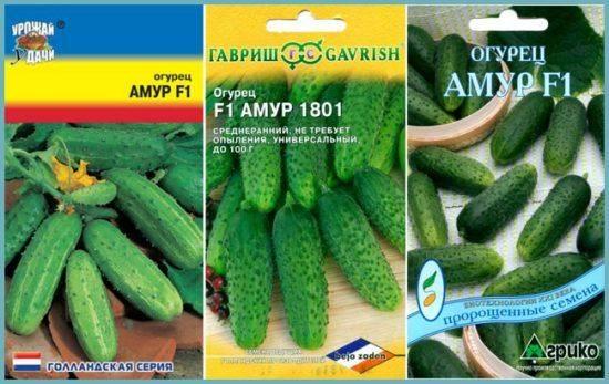 Огурец амур f1: характеристика и описание гибрида, выращивание и уход