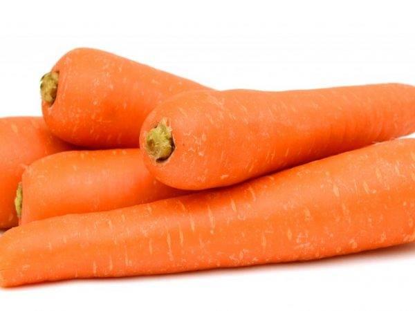 Описание сорта морковь тушон - агро журнал pole39.ru