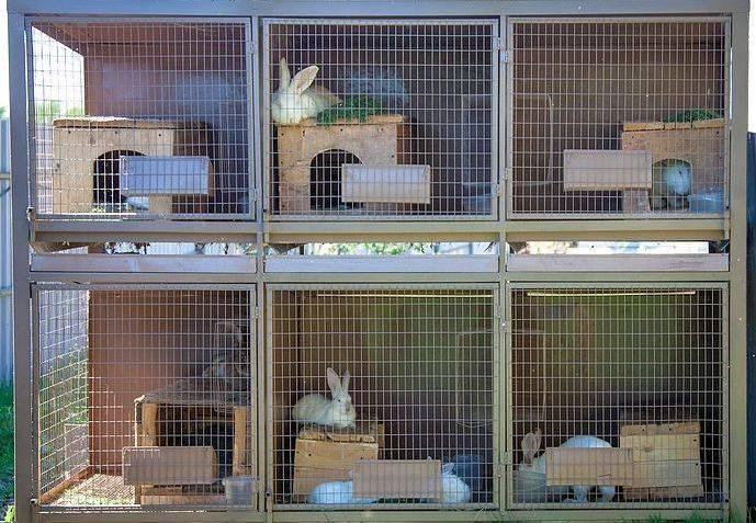 Как сделать клетку для кроликов своими руками- пошаговая инструкция